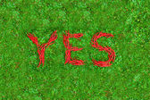 """""""YES"""" word on the green grass — Stockfoto"""