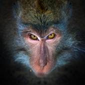 Wicked monkey portrait — Stock Photo