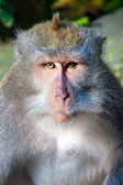 Monkey portrait close up — Stock Photo