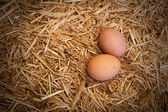 Eggs in a nest of hay — Stock Photo