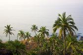 Jungle and blue sea — Stock Photo