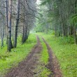 Mountain road in the forest — Stock Photo #70257221