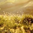 Green meadow in the rays — Stockfoto #70257291