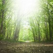Spring green forest — Stock Photo #70259013