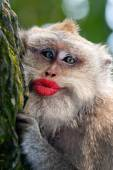 Funny monkey with close up — Stock Photo