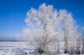 Beautiful trees in white frost — Stock Photo