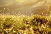 Green meadow in the rays — Stock Photo