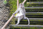 Funny sitting monkey — Stock Photo