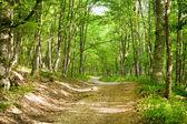 Voorjaar groen bos — Stockfoto