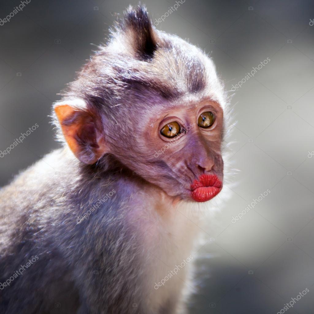 Фото весёлые обезьяны
