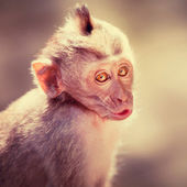 Cute hamming monkey baby — Stock Photo