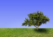 Big lonely tree — Stock Photo