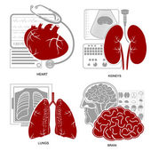 Four flat design medecine icon heart lungs brain kidneys and their diagnostic equipments — Stockvector