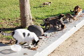 Feeding the homeless cats and guinea fowl — Zdjęcie stockowe
