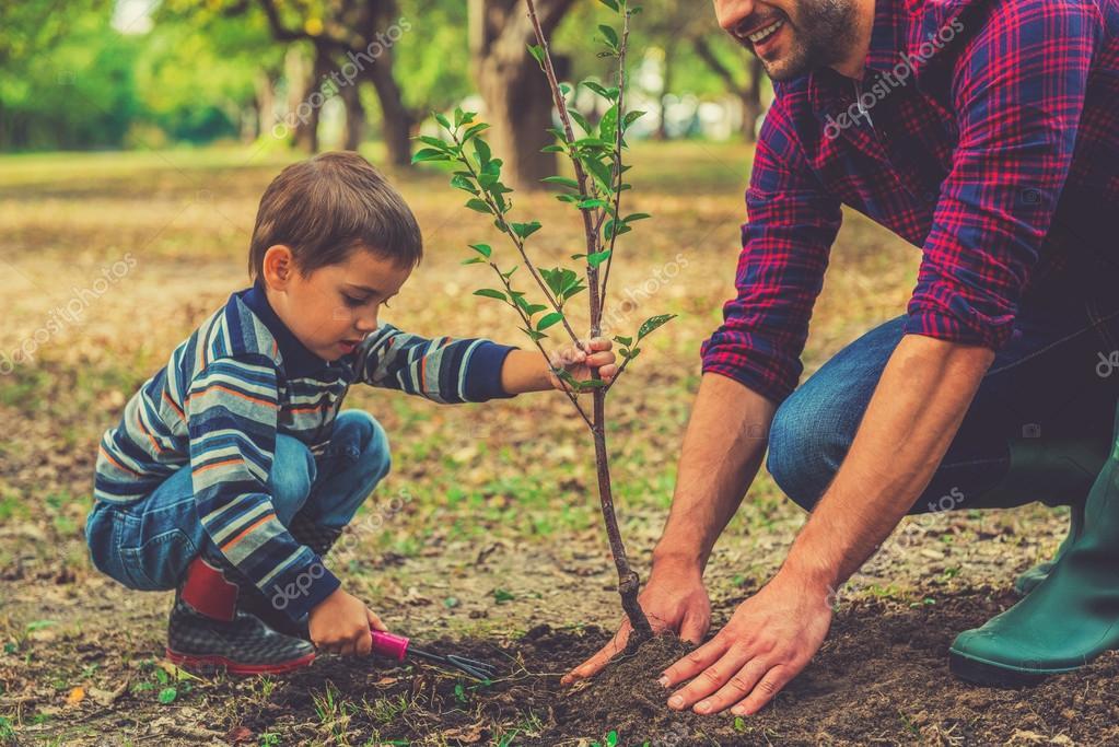 Картинка как сажают дерево 753