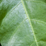 Green Leaf — Stock Photo #72887095