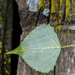 Green Leaf — Stock Photo #75912879