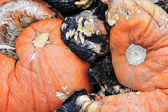 Rotten Pumpkins — Stock Photo