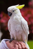 Witte parrot — Stockfoto