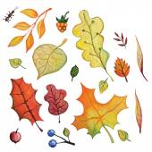 Watercolor autumn Leaves set — Stock Photo