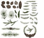 Various pine, spruce branches and cones — Stock Photo