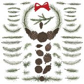 Set pine, spruce branches, cones — Stock Photo
