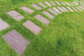 Taş kaldırım bahçede sarma — Stok fotoğraf