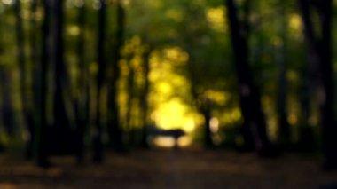 Paisaje de otoño en el parque forestal. Sendero del bosque en el otoño. Caminar en el parque de otoño en la naturaleza. — Vídeo de Stock