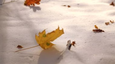 Autumn leaves on white snow close-up. The leaves fall on the snow in the park. The first snow in the autumn park. The leaves fall on the snow in the park. — Stock Video