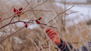 Caucasian boy eating winter berries. Portrait of a teenage child on a background of winter nature. The child is studying wildlife winter. — Stock Video