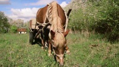 Horse and cart grazing in nature. Horse pulled by cartload, grazing in the countryside. Rural landscape with a horse in the spring. — Stockvideo