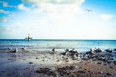 Beach with gulls in Gdynia — Stock Photo