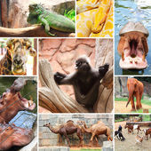 Animals at Nakhon Ratchasima zoo — Stock Photo