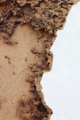 Damaged wooden board — Stock Photo