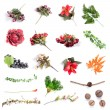 Set of assorted flowers — Stock Photo #62218431