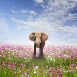 Elephant on flower field and clouds sky — Stock Photo #75791981