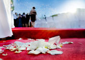 Wedding petals of roses on red carpet — 图库照片