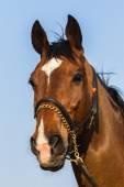 Closeup portrait cheval — Photo