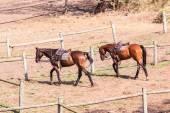 Horse Ponies Closeup Portrait — Stock Photo