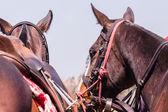 лошади пони портрет крупным планом — Стоковое фото