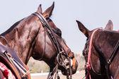 Konie kucyki zbliżenie portret — Zdjęcie stockowe