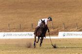Jezdeckých koních — Stock fotografie