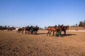 Equestrian Horse Riding — Stock Photo