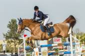 Equestrain cheval saut d'obstacles — Photo