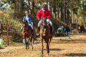 Equestrain Horse Show Jumping — Stock Photo