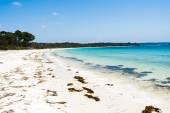 Blue Ocean Beach Seaweed Landscape — Stock Photo