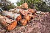 Tree logging Stacked — Stockfoto