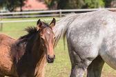 Horse Foal Colt Stud Farm — Stock Photo