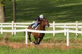 Race Horse Jockey Training Action — Stockfoto