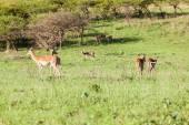 Buck Landscape Wildlife — Стоковое фото